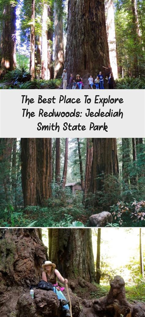 Jedediah Smith Redwoods State Park In California Iedit