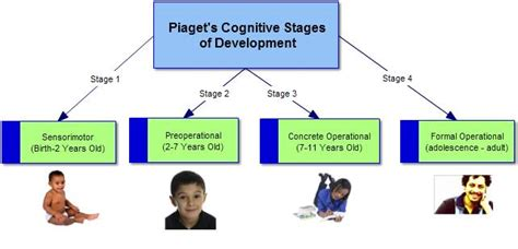 cognitive development child development 495 | 4851031 orig