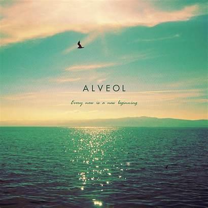 Beginning Every Alveol Album Wallpapers Noisy Meditation