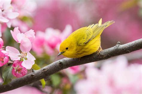 5 Spring Birds to Watch For   Lyric Wild Bird Food
