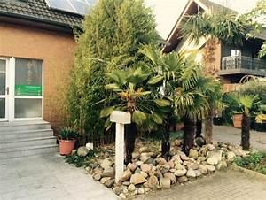 Trachycarpus Fortunei Auspflanzen : hanfpalme trachycarpus fortunei 30 40cm stamm 150 170cm gesamth he hanfpalme trachycarpus ~ Eleganceandgraceweddings.com Haus und Dekorationen