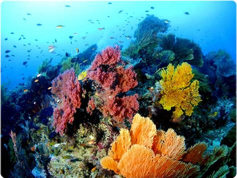 Colorful reefs teeming with life!