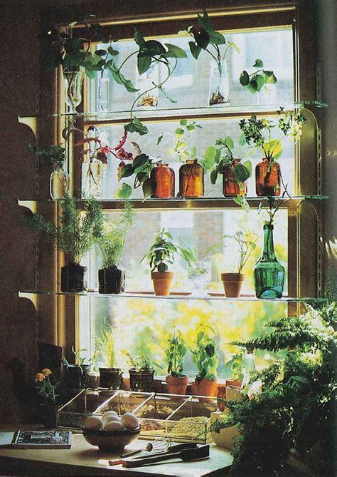 Plants On Windows by Kitchen Window Idea Kitchen Window