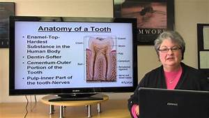 Career Terminology Basic Dental Terminology Youtube