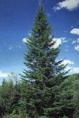photo de l arbre