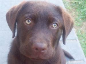 Green Eyed Dog Breeds Pictures to Pin on Pinterest - PinsDaddy