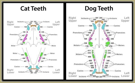 veterinary dentist animal hospital veterinarian surgeon houston tx