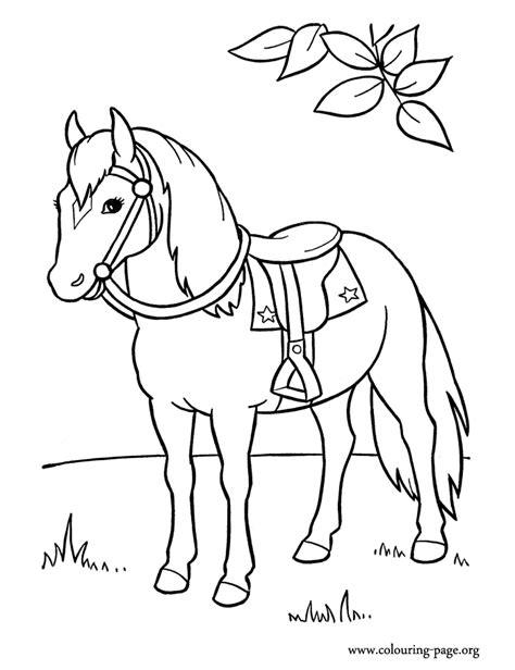 Printable Horses Coloring Pages Horses An Coloring Page