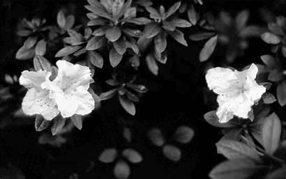 Flowers Wallpapers Desktop Dark Flower Widescreen Wallpapersafari