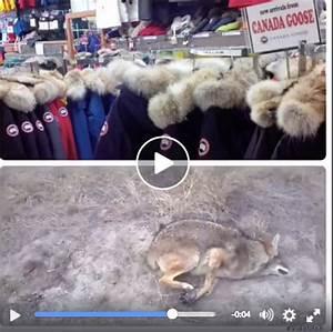 Canada Goose Jacket Peta Canada Goose Coats Sale 2016