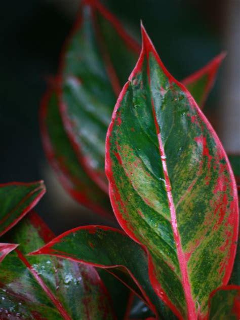 tanaman hias budayakan menanam