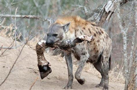 os  animais mais perigosos  mundo voce nao imagina