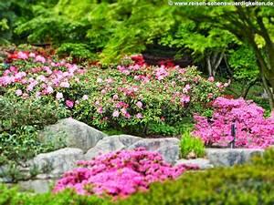 Bilder Blumen Kostenlos Downloaden : pc hintergrundbilder kostenlos tiere natur reise st dte in bilder blumen kostenlos ~ Frokenaadalensverden.com Haus und Dekorationen
