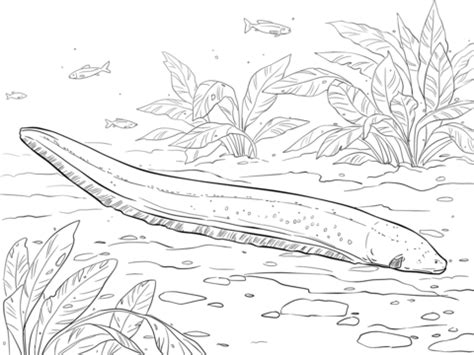 electric eel coloring page  printable coloring pages