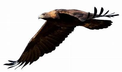 Eagle Golden Clipart Transparent Bird Head Mask