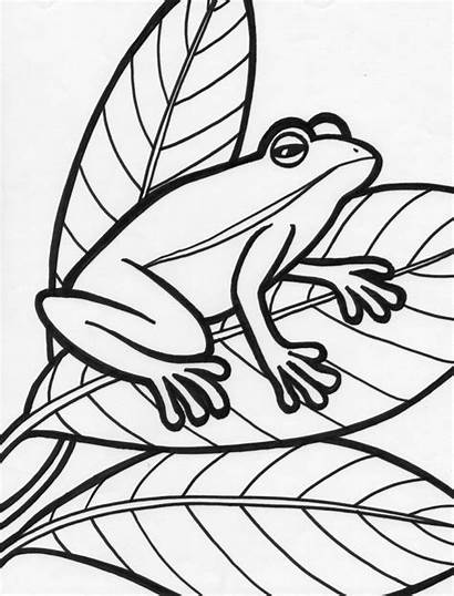 Frog Coloring Pages Printable Template Sheet Frogs