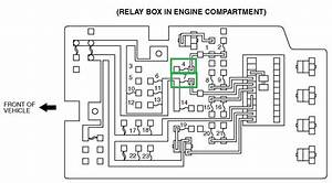 Pajero Fuse Box Diagram Wiring  Wiring Diagram  Amazing