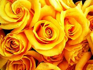 Flowers Bouquet Roses Yellow Background Wallpaper   I HD ...
