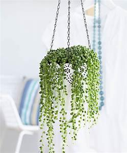 Plante D Intérieur : plante d interieur retombante digpres ~ Dode.kayakingforconservation.com Idées de Décoration