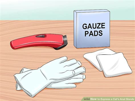 how to express cat glands how to express a cat s anal glands 7 steps with pictures