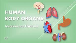 Human Body Organs  Locations And Functions  Science For