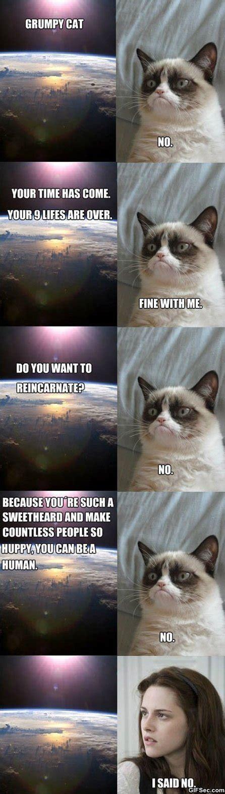 Grumpy Cat Memes Funny - memes grumpy cat jpg