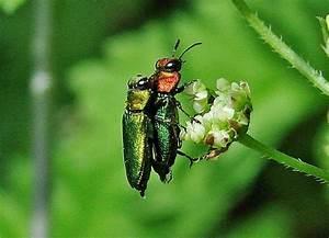 Käfer Im Garten : naturspaziergang k fer nach farben formen und gr en gr n ~ Lizthompson.info Haus und Dekorationen