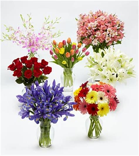 flowers of the month monthly bulb and plant gifts
