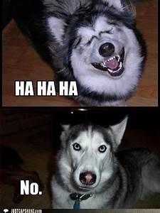 Dog Meme Husky Jokes