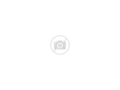 Street Tree Lined