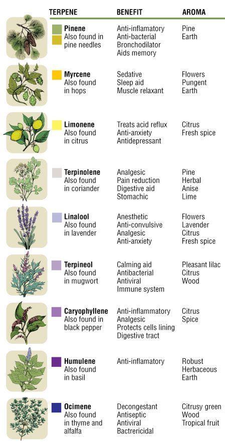 essential oil terpenes google search terpenes