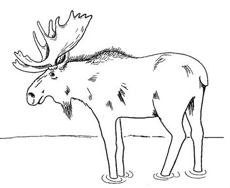 moose coloring page   printable coloring pages coloring pages  coloring pages