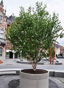Bäume In Kübeln : b ume in beh ltern eine praktische l sung f r gr n in der ~ Lizthompson.info Haus und Dekorationen