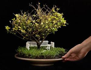 miniatur bonsai garten bonsai empire With whirlpool garten mit bonsai empire