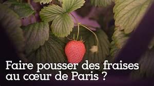 Faire Pousser Des Fraises : faire pousser des fraises au c ur de paris youtube ~ Melissatoandfro.com Idées de Décoration