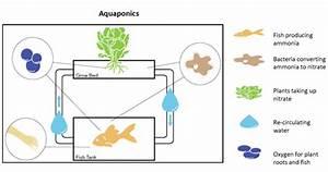 Components Of An Aquaponics System