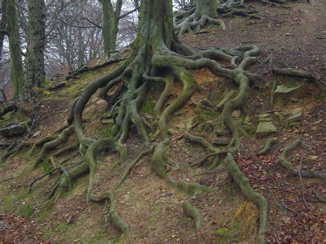 Mr. Miyagi's Little Trees