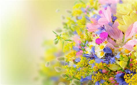 flowers for and summer summer flowers flowers kwiaty pinterest flower wallpaper and flowers