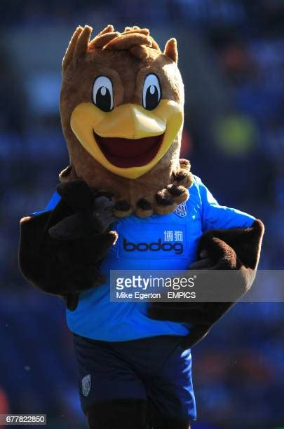 Baggies Bird Photos and Premium High Res Pictures - Getty ...