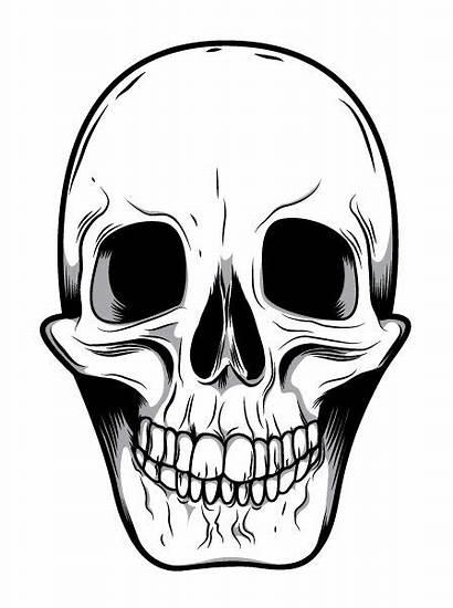 Skull Skeleton Face Clipart Caveiras Desenhar Smiling