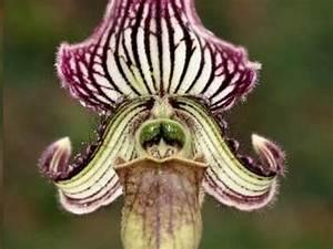 Rempoter Une Orchidee : entretenir une orchid e miniature guide pratique ~ Mglfilm.com Idées de Décoration