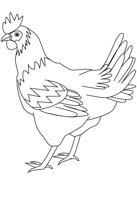 drawing healthy hen coloring page coloring sky