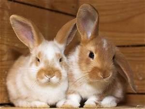 Kaninchenkäfig Für 2 Kaninchen : stall aus holz f r unsere 2 hasen gesucht kaufungen 7639235 ~ Frokenaadalensverden.com Haus und Dekorationen