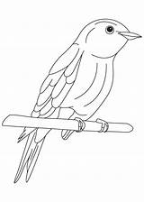 Bluebird Coloring Bird Pages Happiness Eastern Drawing Drawings Getdrawings Popular sketch template