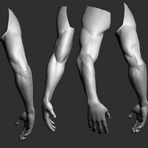 Artstation - Anatomy Male Arm