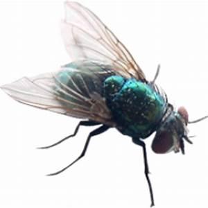 Fly Transparent background image