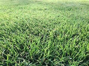Semer Gazon Periode : semer une nouvelle pelouse mr jardinage ~ Melissatoandfro.com Idées de Décoration
