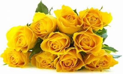 Roses Yellow Rose Definition Flowers Delicious Flower