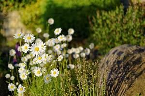 Blumen Im Garten : blumen im garten mein brochterbeck ~ Bigdaddyawards.com Haus und Dekorationen