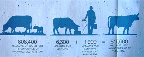1 Kg Of Beef Takes 100'000 Liters Of Water!  No It Does